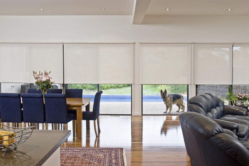 half closed roller blinds with peeping doggy